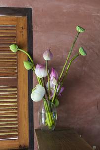 ハスの花のある部屋の写真素材 [FYI00797092]