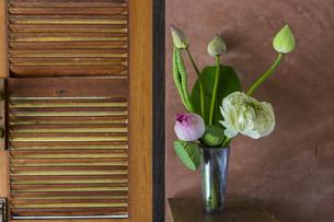 ハスの花のある部屋の写真素材 [FYI00797093]