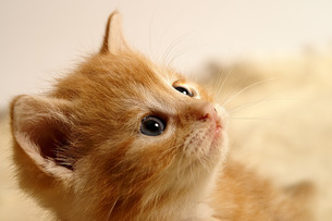 little kittyの写真素材 [FYI00797171]
