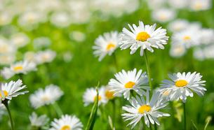 plants_flowersの写真素材 [FYI00797436]