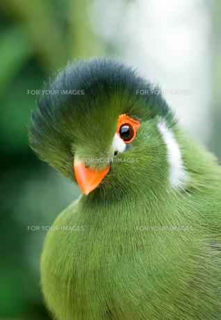 birdsの写真素材 [FYI00797511]