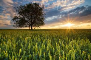 grass_fieldsの素材 [FYI00797531]