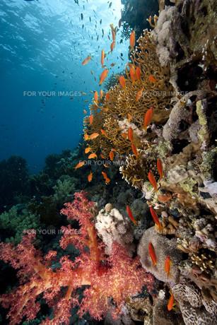 fishes_crustaceansの素材 [FYI00797713]
