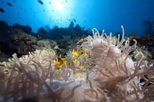 fishes_crustaceansの写真素材 [FYI00797715]
