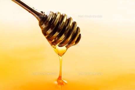 honeyの素材 [FYI00797764]