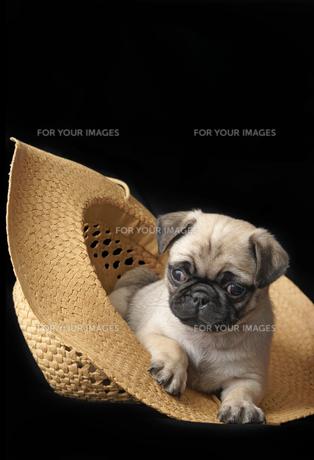 home_animalsの写真素材 [FYI00797918]