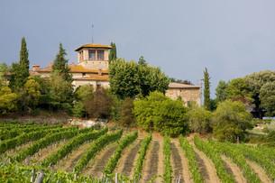 house with vineyardの写真素材 [FYI00798043]