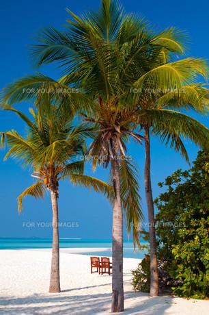tropical beachの写真素材 [FYI00798092]