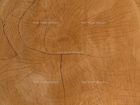 wood structureの素材 [FYI00798118]