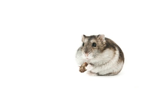 home_animalsの写真素材 [FYI00798243]