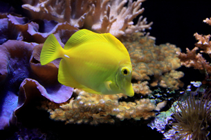 fishes_crustaceansの写真素材 [FYI00798451]