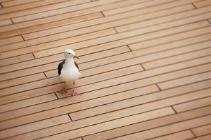 birdsの素材 [FYI00798473]