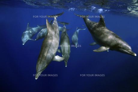 underwater_worldの素材 [FYI00798499]