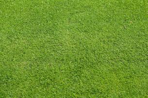 grass_fieldsの写真素材 [FYI00798500]