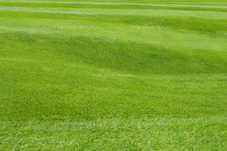 lawn cut short and neatの写真素材 [FYI00798502]