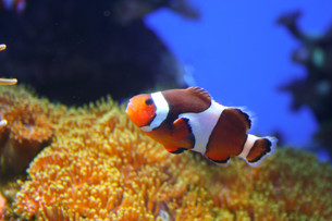 fishes_crustaceansの写真素材 [FYI00798532]