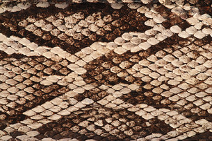 reptiles_amphibiansの写真素材 [FYI00798590]