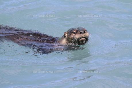 mammalsの写真素材 [FYI00798670]