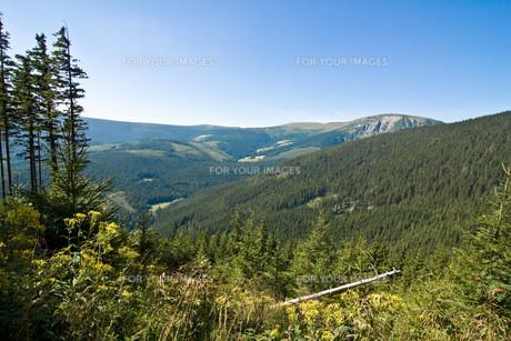czech forestの素材 [FYI00798711]