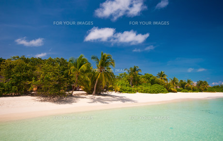 tropical coastの写真素材 [FYI00798740]
