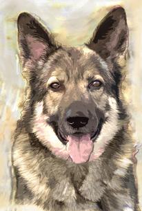 german shepherd posterの写真素材 [FYI00799039]