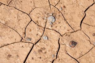 droughtの素材 [FYI00799123]