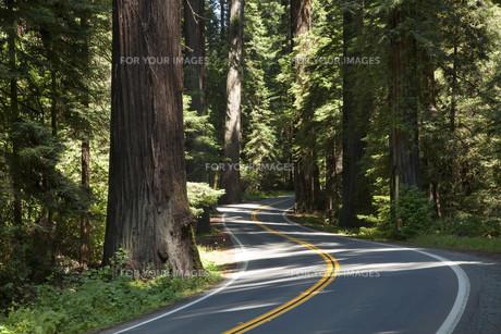highway through the redwoodsの写真素材 [FYI00799219]