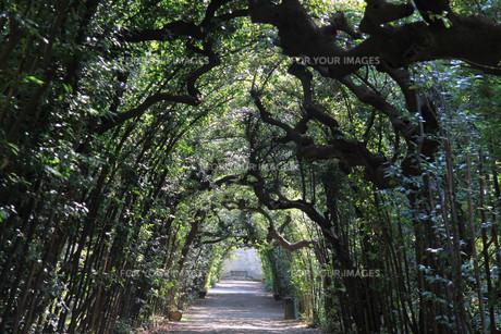 portico in the boboli gardens in floreの写真素材 [FYI00799224]