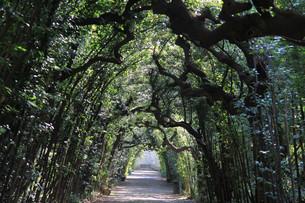 portico in the boboli gardens in floreの素材 [FYI00799224]