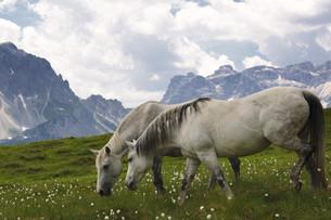 horsesの写真素材 [FYI00799230]