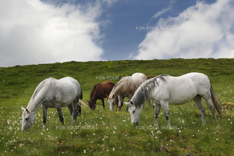 horsesの写真素材 [FYI00799232]