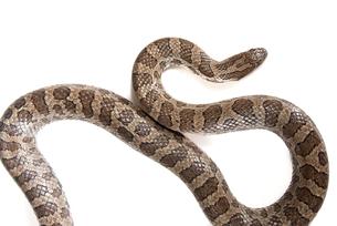 reptiles_amphibiansの写真素材 [FYI00799259]