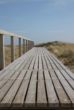 boardwalk in the dunesの素材 [FYI00799293]