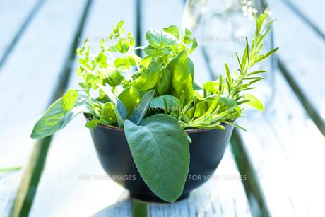 fresh garden herbsの素材 [FYI00799354]