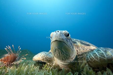 fishes_crustaceansの素材 [FYI00799554]