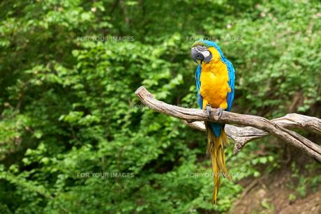 birdsの写真素材 [FYI00799691]