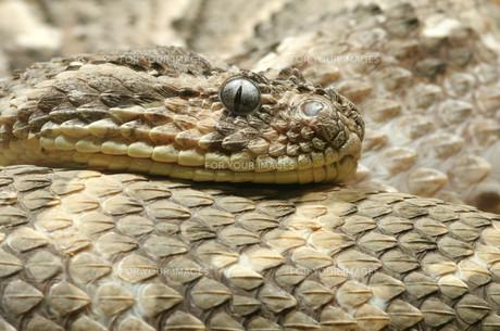 reptiles_amphibiansの写真素材 [FYI00799695]