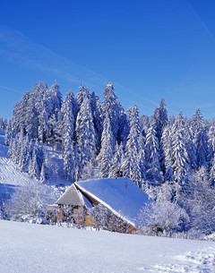 winter idyll in the black forestの写真素材 [FYI00799765]