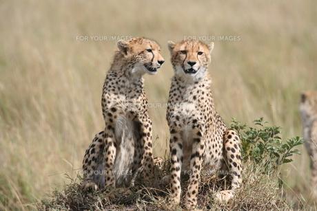 mammalsの写真素材 [FYI00799778]