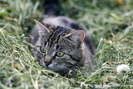 home_animalsの素材 [FYI00800276]