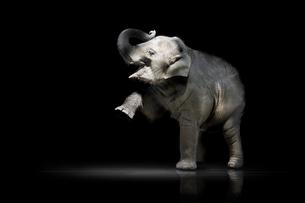 mammalsの素材 [FYI00800319]