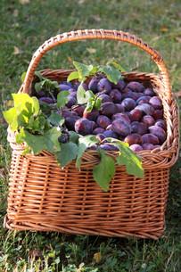 fruits_vegetablesの写真素材 [FYI00800528]