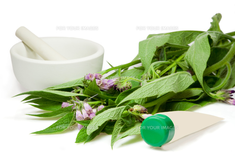 comfrey with cream tube qfの素材 [FYI00800617]