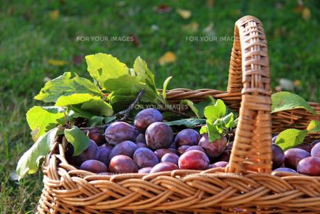 fruits_vegetablesの写真素材 [FYI00800764]