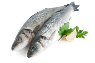 fishes_crustaceansの写真素材 [FYI00801152]