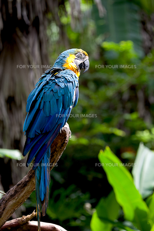 birdsの写真素材 [FYI00801807]