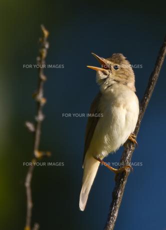 birdsの素材 [FYI00802024]