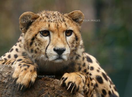mammalsの写真素材 [FYI00802117]