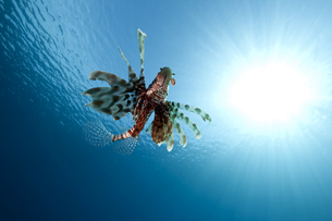 fishes_crustaceansの写真素材 [FYI00802362]