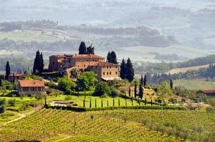 tuscany weingut - tuscany vineyard 03の素材 [FYI00802391]